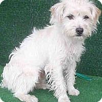 Adopt A Pet :: Chong - Encino, CA