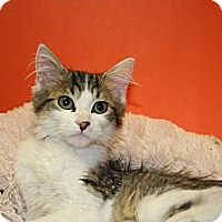 Adopt A Pet :: HUNTER - SILVER SPRING, MD