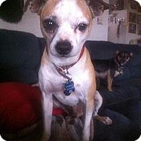 Adopt A Pet :: Mickey - El Paso, TX