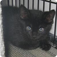 Adopt A Pet :: Chornee - Dallas, TX