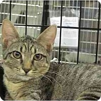 Adopt A Pet :: Dru - The Colony, TX