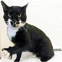 Adopt A Pet :: Hercules - Arlington, VA