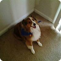 Adopt A Pet :: Bandit - Alderson, WV