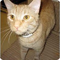 Adopt A Pet :: Lucky - Catasauqua, PA