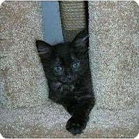 Adopt A Pet :: Gypsy - Davis, CA