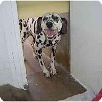 Adopt A Pet :: Patience - Mesa, AZ