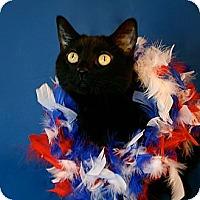 Adopt A Pet :: Shyla - Green Bay, WI