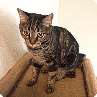 Adopt A Pet :: MISS EVA - Fresno, CA