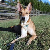 Adopt A Pet :: Madison (fostered in NC) - Cranston, RI