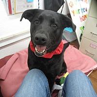 Adopt A Pet :: Jazzie - Lake Odessa, MI