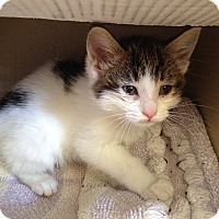 Adopt A Pet :: Jilly - Island Park, NY