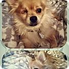 Adopt A Pet :: Prince William