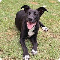 Adopt A Pet :: Sparkles - Pinehurst, NC