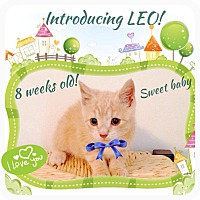 Adopt A Pet :: Leo - Mount Laurel, NJ