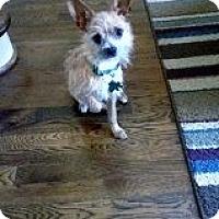 Adopt A Pet :: Rio - Alpharetta, GA