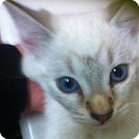 Adopt A Pet :: Yoki - Mission Viejo, CA
