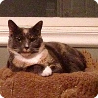 Adopt A Pet :: Simone - River Edge, NJ