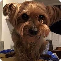 Adopt A Pet :: Recall - Sinking Spring, PA
