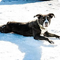 Adopt A Pet :: Piston--he's in NH! - Chichester, NH