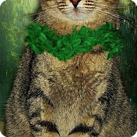 Adopt A Pet :: Sassy (in VA) - Portland, ME