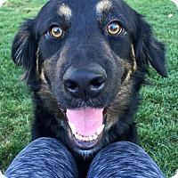Adopt A Pet :: Brooks - Adopted! - San Diego, CA