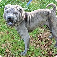 Adopt A Pet :: MAGOO (aka Mr. Squishy) - Spring Valley, NY