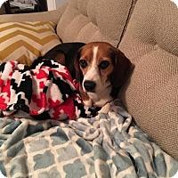 Adopt A Pet :: Scooby - Birmingham, AL
