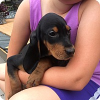 Adopt A Pet :: CASH - Rossford, OH
