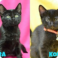 Adopt A Pet :: Kira 160434 - Atlanta, GA