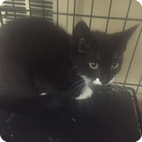 Adopt A Pet :: Jill - Forest Hills, NY
