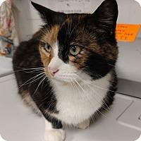 Adopt A Pet :: Dawn - Acushnet, MA