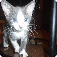 Adopt A Pet :: Ariel