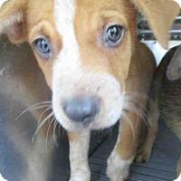 Adopt A Pet :: JACK - Conroe, TX