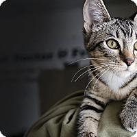 Adopt A Pet :: Annie - Palmdale, CA