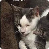 Adopt A Pet :: Izzy - West Orange, NJ