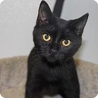 Adopt A Pet :: Merrick - Greensboro, NC