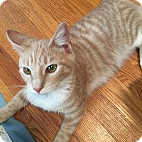 Adopt A Pet :: Tucker (with Mikie) - Fairfax, VA