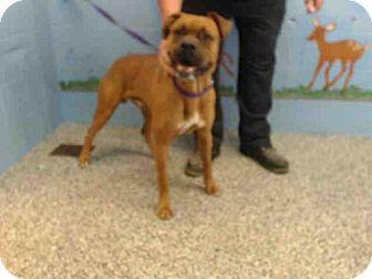 Boxer Mix Dog for adoption in San Bernardino, California - RESCUE ONLY