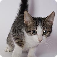 Adopt A Pet :: Jelly Bean - Baton Rouge, LA