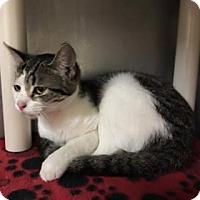 Adopt A Pet :: Tinker Bell - Flint, MI