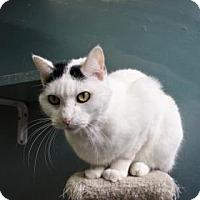 Adopt A Pet :: Oden - West Des Moines, IA
