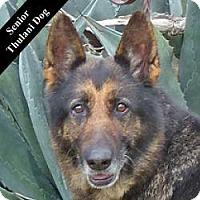 Adopt A Pet :: Tasha T. - Cupertino, CA