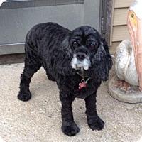 Adopt A Pet :: Laney - Livonia, MI