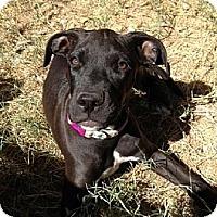 Adopt A Pet :: Penny - Mesa, AZ