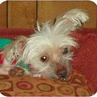 Adopt A Pet :: Kloe - Allentown, PA