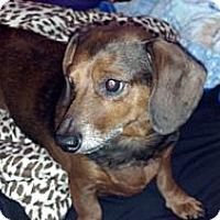 Adopt A Pet :: PEPE - Portland, OR