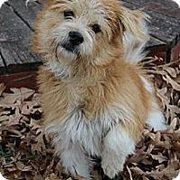 Adopt A Pet :: Jolie - Wytheville, VA