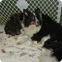 Adopt A Pet :: Eve - Antioch, IL