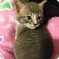 Adopt A Pet :: Tabitha - Bentonville, AR