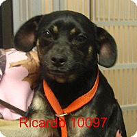 Adopt A Pet :: Ricardo - baltimore, MD